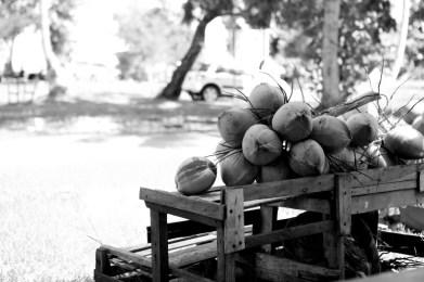 kelapa muda dijual untuk diminum