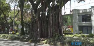 árboles_parque_de_belén