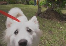 postre_animales_perros