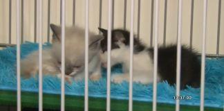 mascotas_gatos