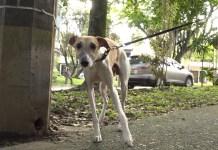 perro_mascota