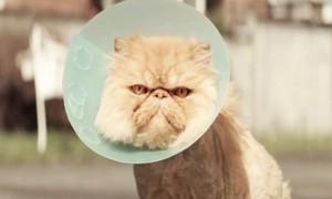 chat pas super joyce