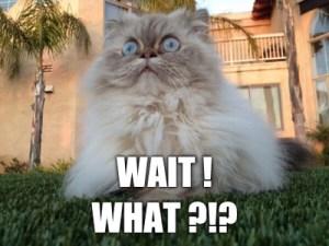 cat wait what