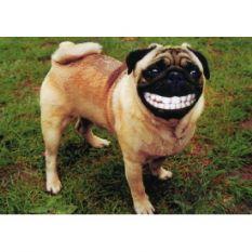 dog laugh