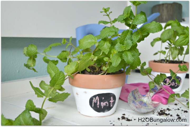 Small labeled terracotta pot herb planters