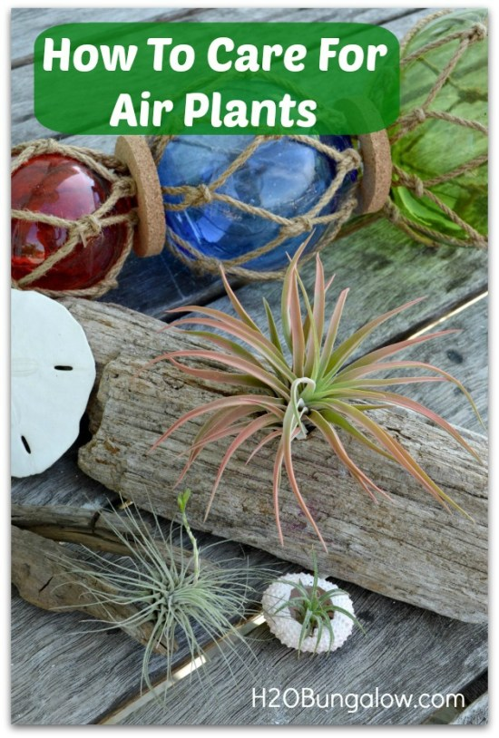 How To Care For Airplants