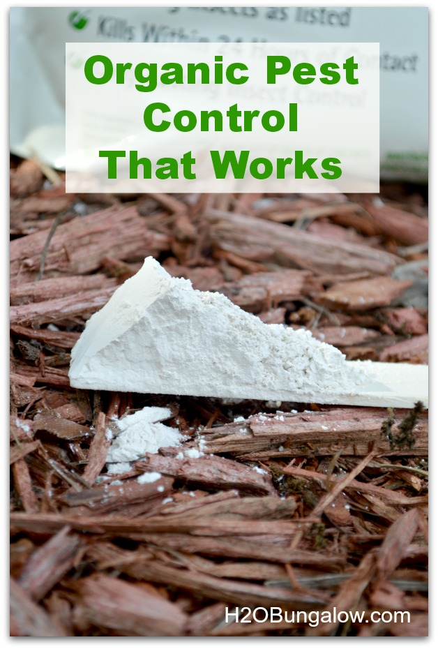 diatomaceous earth organic pest control that works