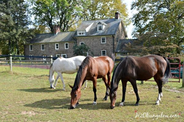 horses-and-stone-farmhouse-h2obungalow