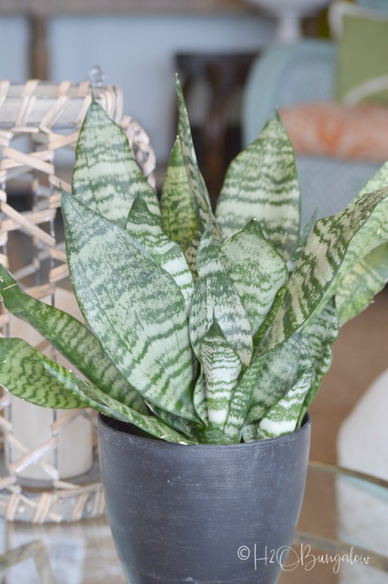 13 tough low light indoor plants that look great in any decor. Many of these low light plants are drought tolerant, and grow without much care. I've grouped these easy to grow hardy plants by vines, palms and other pretty indoor low light plants.
