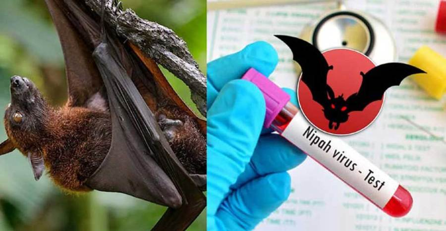 What is Nipah Virus? Know in detail about the symptoms, prevention, and treatment of the disease 2021