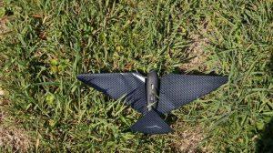 bionic bird dans l'herbe