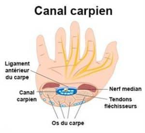 canal-carpedien-2