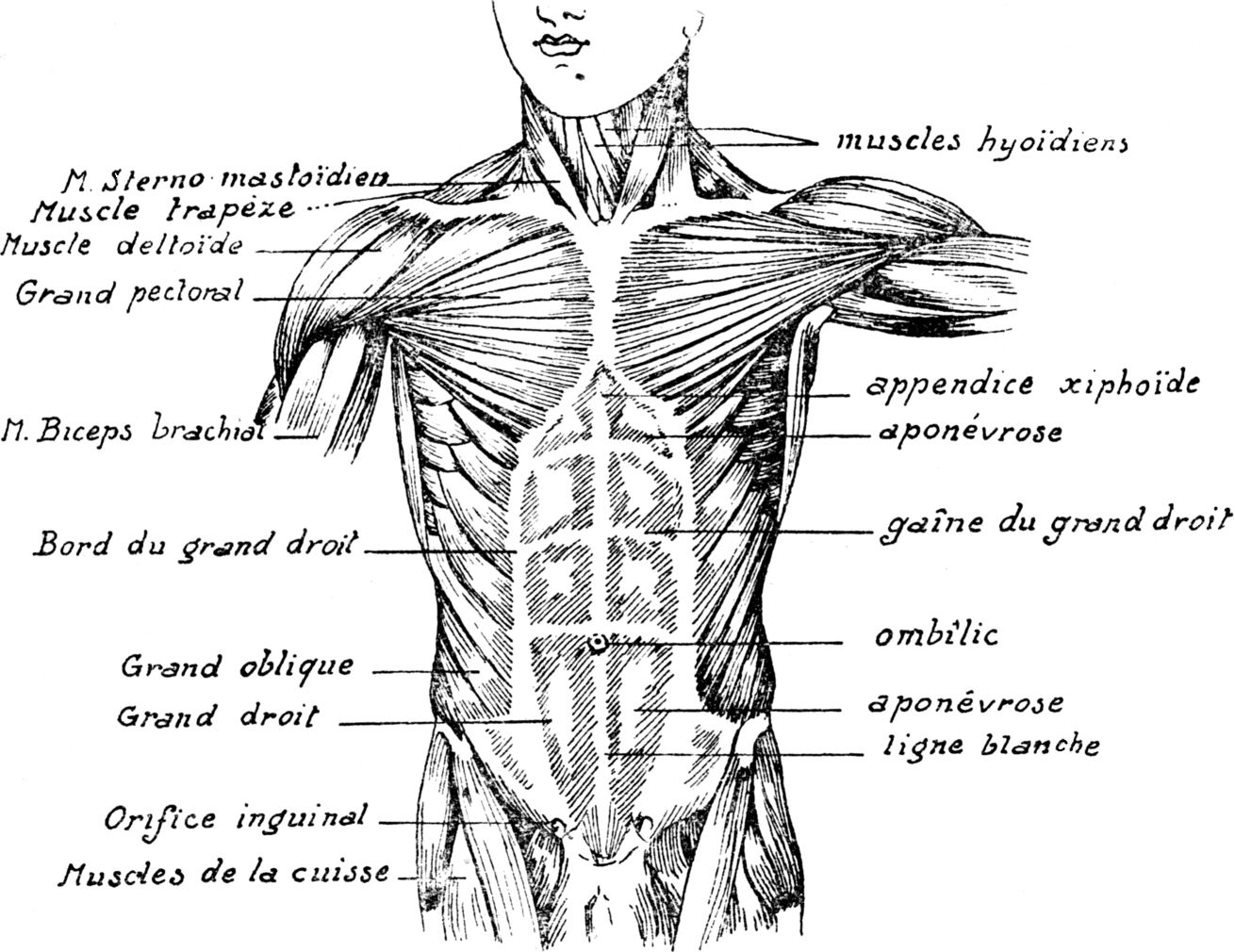 Diagram Of Bloated Abdoman