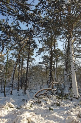 Bosjes van Poot8