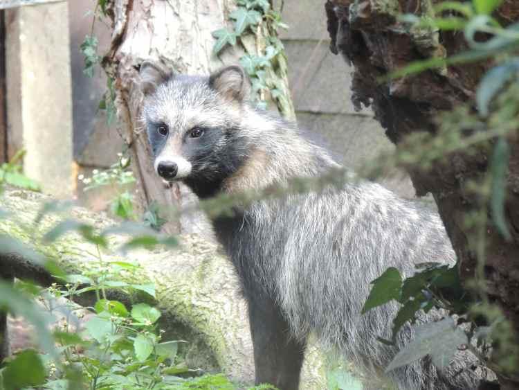 Foto: Wasbeerhond in Artisklas