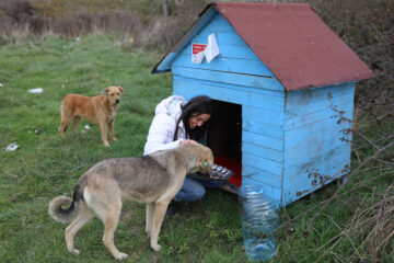 THY Kabin Memuru Sokak Hayvanlarına Yuva Kuruyor - Airline Haber