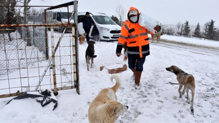 Kar yağışının beyaza bürüdüğü Edirnede, kartpostallık manzaralar oluştu