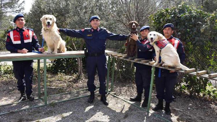 Jandarmanın köpekleri eğitimde