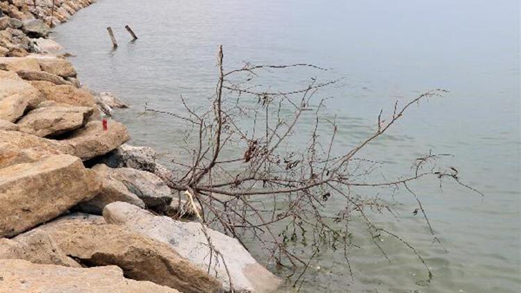 Van'da piknik alanındaki ağaçlar kesilip, göle atıldı