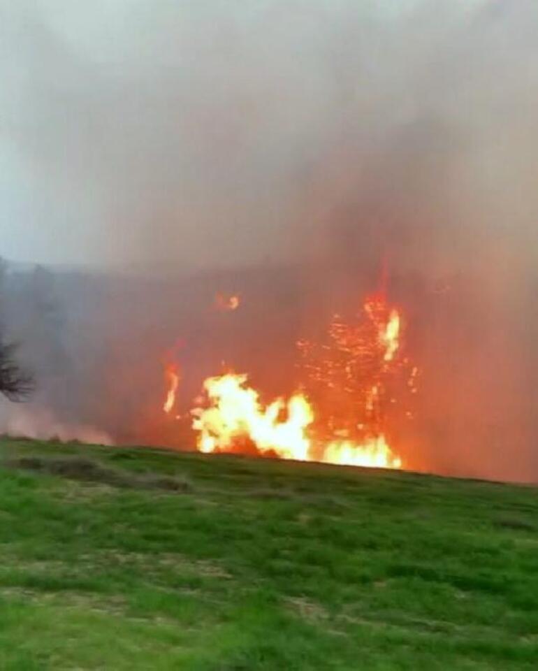 Muğladaki orman yangınında sabotaj şüphesi Soruşturma başlatıldı
