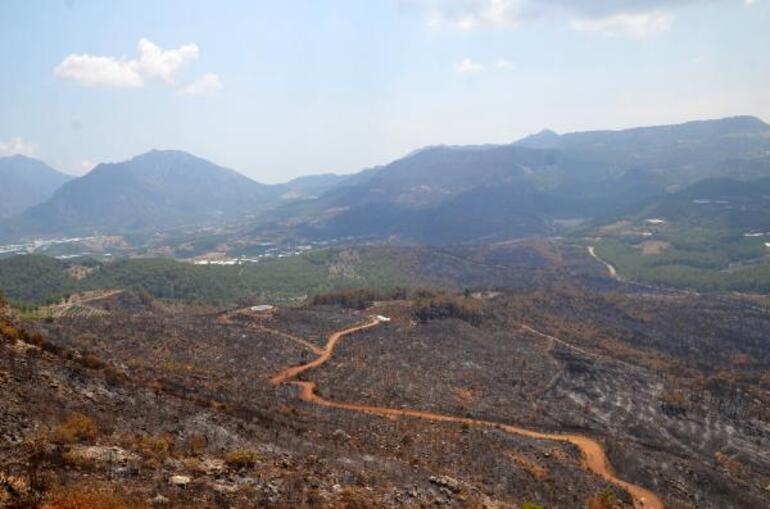 Antalyada orman yangınında küle dönmüştü 13 yılda yeşile büründü