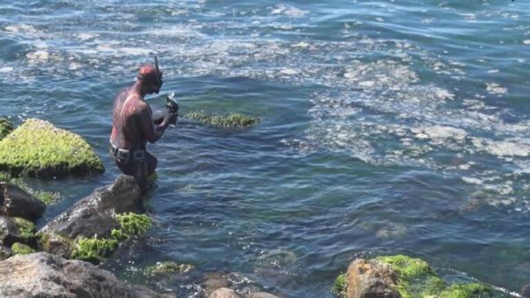 Kadıköyden daldı, deniz dibini saran salyayı görüntüledi Kötü haberi bu sözlerle duyurdu: Sadece yüzde 5i