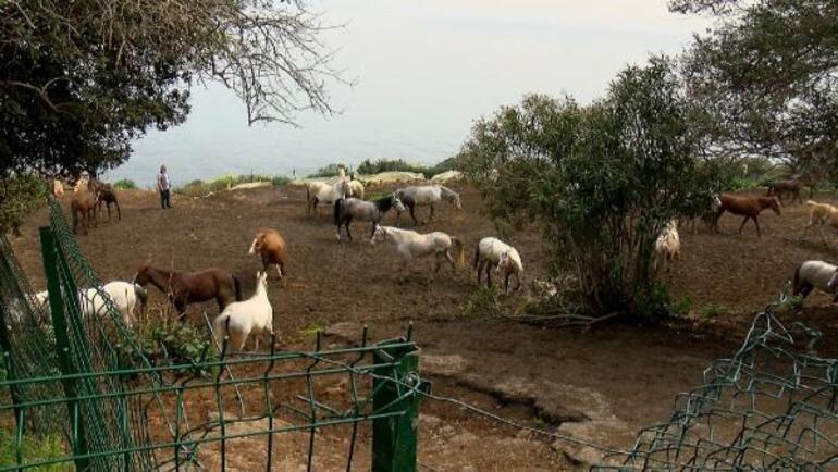 Kayıp 99 at olayında yeni detaylar Veteriner işleri müdürüne ihmal soruşturması