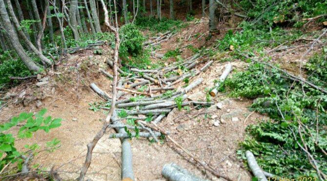 Uludağ'daki ağaç katliamına tepki: Tüm hızıyla sürüyor