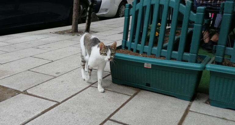 Küçükçekmecede kedi yediğini itiraf eden Japon vatandaşı sınır dışı edilecek