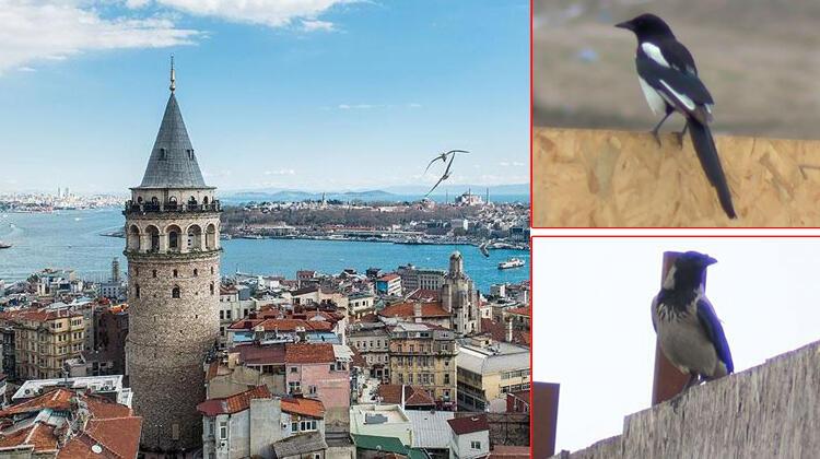 Son dakika haberler: İstanbul'da Batı Nil virüsü endişesi! 'Ateş, eklem, kas ağrısı yapıyor'