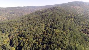 Son dakika haberi: Gümüşhane'de ormanlara girişler yasaklandı