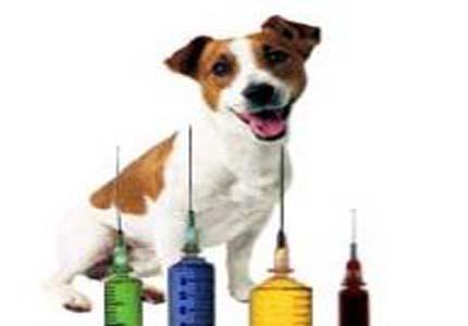köpek hastalığı Ekinokok