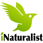 Sign up for iNaturalist.org! Citizen science!
