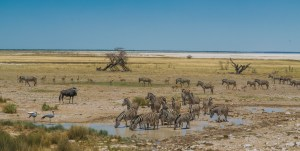 Safári: Etosha – Namíbia