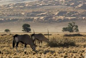Roteiro de Viagem, 12 dias pela Namíbia