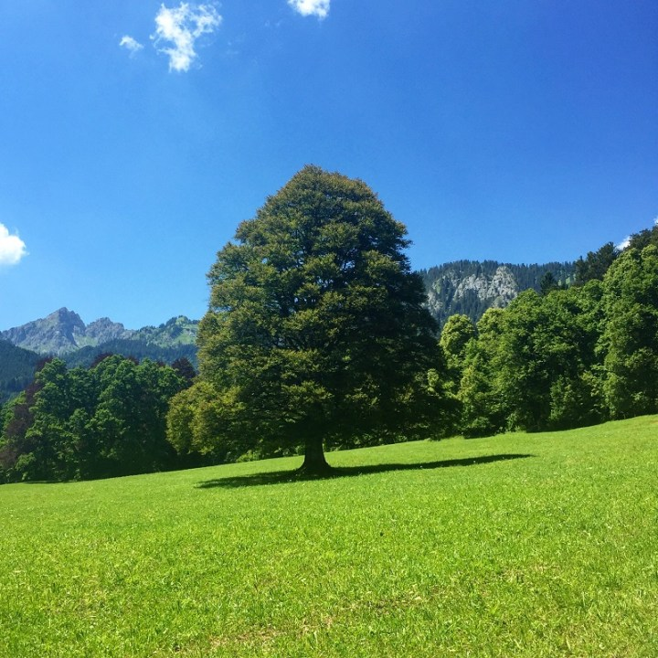 There is no shortage of lawns at Linderhof.