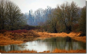 paysage-calme