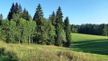 Effets-bénéfiques-des-paysages-et-du-végétal