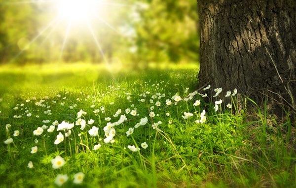bienfaits de la nature sur le stress humain