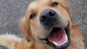 Spotify para Mascotas: Un playlist para dejar a tu perrito solo en casa