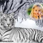 Fotomontaje de tigre de bengala blanco