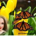 Fotomontaje de mariposas sobre tulipanes