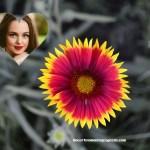 Fotomontaje de flor para decorar tu foto