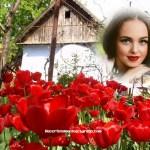 Hermoso fotomontaje con tulipanes rojos
