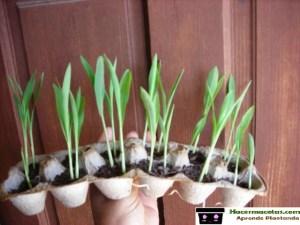 semillero para matas reciclado