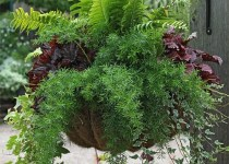 Maceta Colgante Con Plantas