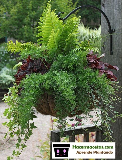 Macetas colgantes parte 1 macetas creativas para plantas - Plantas para macetas exterior resistentes ...