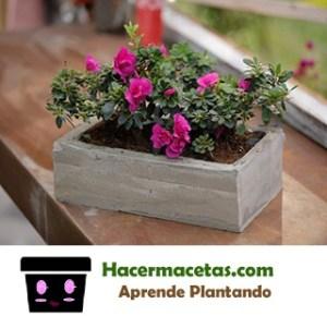 Macetas hechas con cemento para plantas de interior