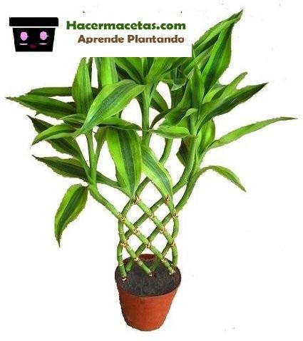 plantas con maceta de interior tejidas