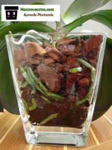 macetas de vidrio con sustrato para orquideas